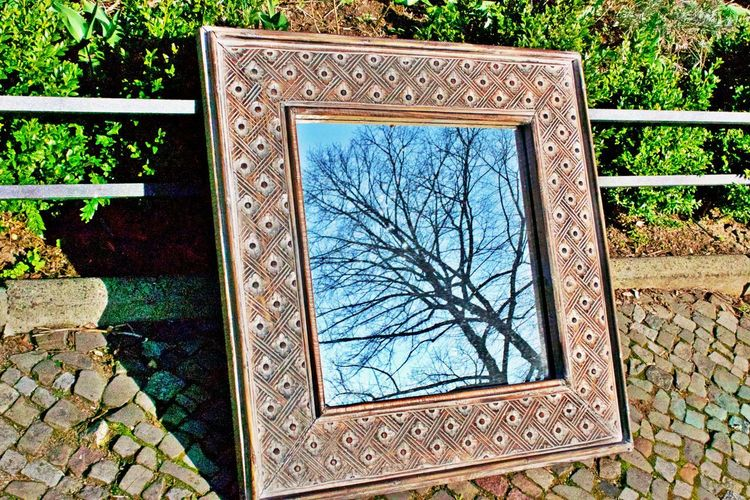 No People Tree Day Plant Architecture Built Structure Reflection Bare Tree Window Outdoors Pattern Glass - Material Mirror Image, Reflection, Reflexion Design Mirror Flea Market Framed Framed Reality