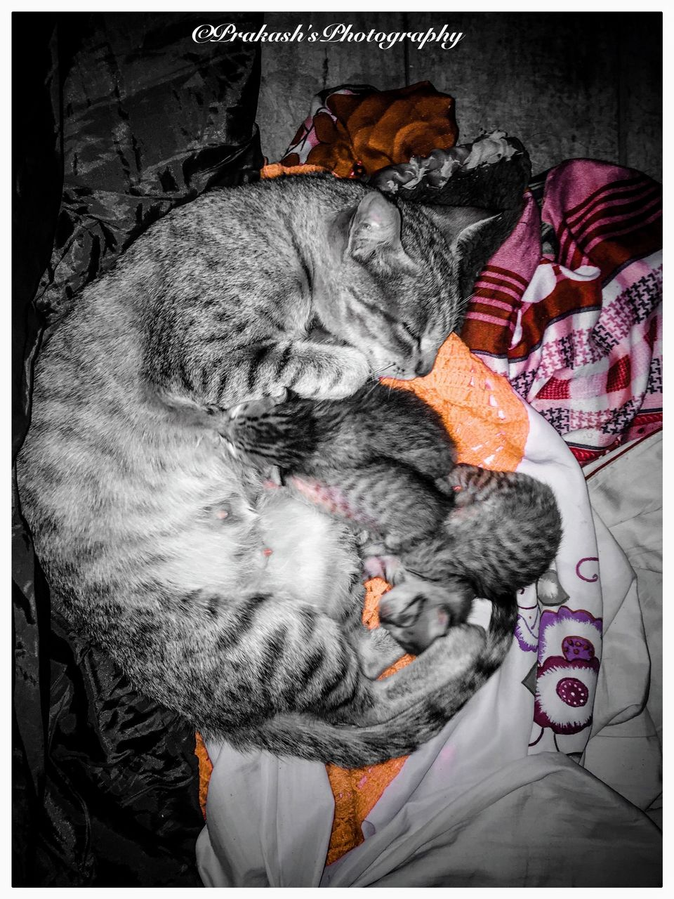 one animal, animal themes, animal, mammal, pets, auto post production filter, domestic animals, transfer print, domestic, relaxation, vertebrate, cat, indoors, feline, domestic cat, no people, furniture, sleeping, close-up, clothing, whisker, tabby, animal head, warm clothing