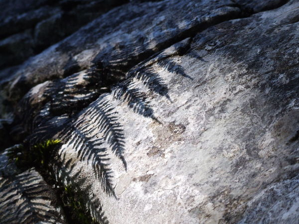 Limestone Plants Close-up Day Light And Shadow Nature No People Outdoors Rock - Object Rock Formation