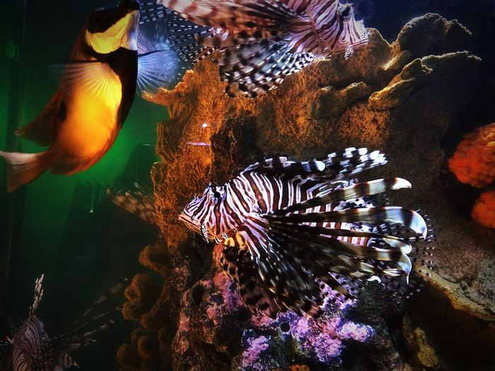 Lionfish Aquarium Nature Nature Photography Galaxy S8+ Frost Musuem