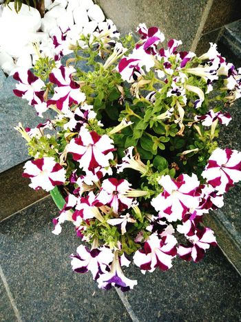 Flowers! Flower Freshness Nature Petal Growth Beauty In Nature No People Day Flower Head Plant Outdoors Different Nature Kalka
