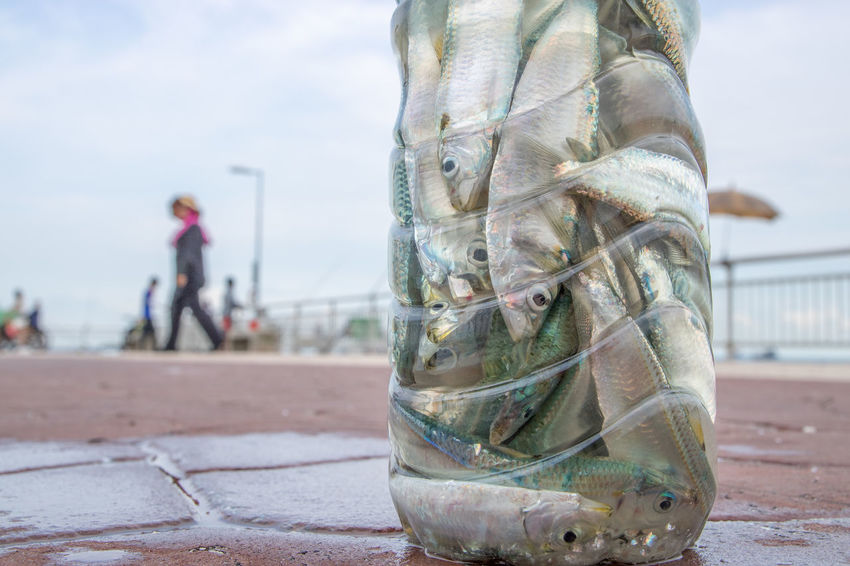 Many pieces of small fish squeezed into a plastic bottle placed on ground of a pier. Bottle Close-up Fish Fishing Hobby Nature Outdoors People Pier Plastic Sardines Squeeze Water