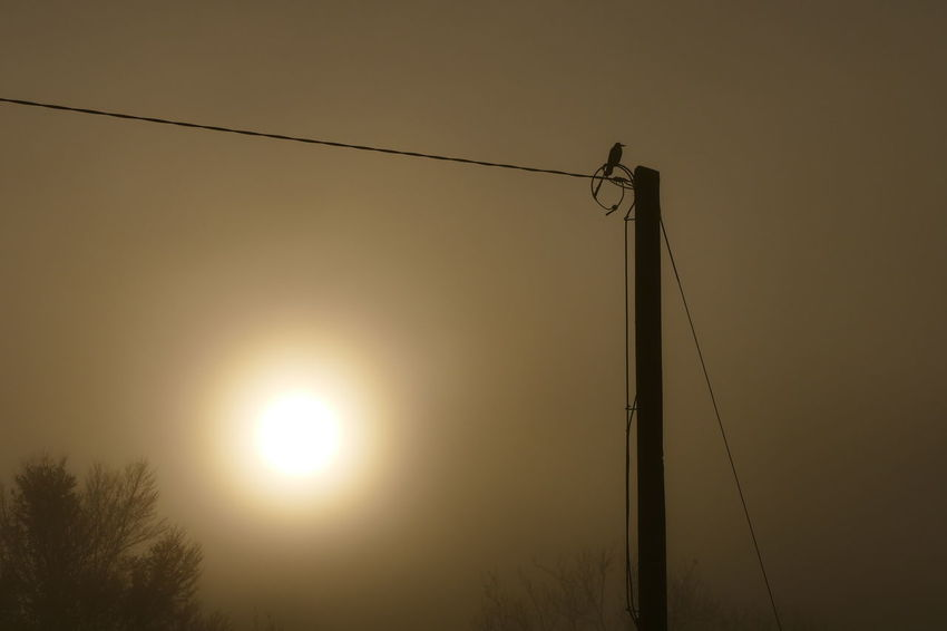 Foggy day.. Cable Connection Day Dream States Electricity  Ethereal Fog Foggy Foggy Weather Hanging Lighting Equipment Low Angle View Nature No People Outdoors Silhouette Silhouette Silhouette_collection Sky Softness Sun Sunset Telephone Line Tree Perspectives On Nature