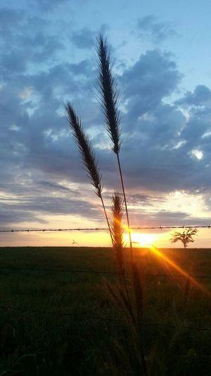 What A Sky! EyeEm Nature Lover SkyCandyEyeEm Best Shots - No Edit