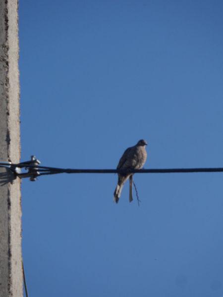 Aves Irapuato Cielo Despejado