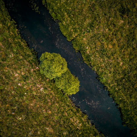 Top down Plant Nature No People Water Scenics - Nature High Angle View Environment Beauty In Nature Green Color Aerial View Day Tranquility Growth Outdoors Full Frame Grass Landscape Tree Tranquil Scene