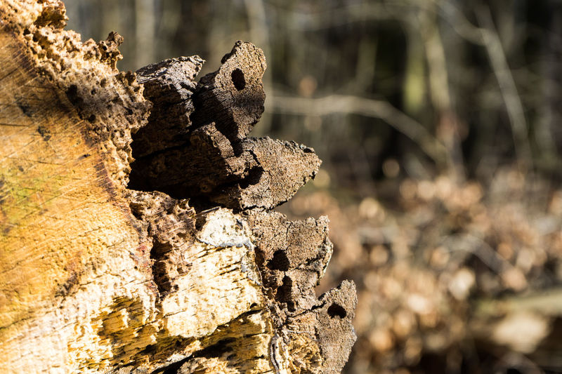 Beauty In Nature Close-up Day Dead Tree Focus On Foreground Nature No People Outdoors Sunlight Tree Stump
