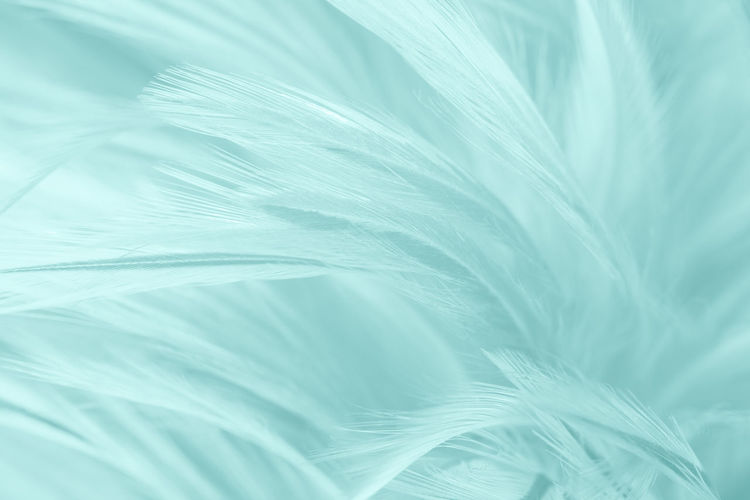 Backgrounds Close-up Leaf Plant Part No People Softness Nature Feather  Full Frame Beauty In Nature Textured  Vulnerability  Freshness White Color Fragility Plant Blue Macro Extreme Close-up Green Color Lightweight Abstract Wind Palm Leaf Abstract Backgrounds