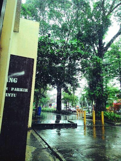 Rain Tree Water Day Wet Waiting Rain Raindrops