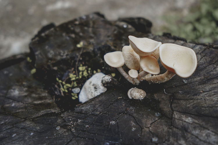 Mushroom Fungus Toadstool Close-up Food No People Vegetable Nature Edible Mushroom Day Tree Solid Selective Focus Land Growth Focus On Foreground Beauty In Nature Plant Field Food And Drink Outdoors Bark