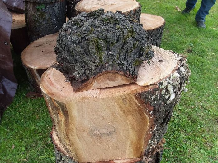 High angle view of tree trunk on field