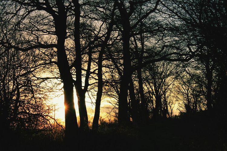 Trees Beautiful Nature