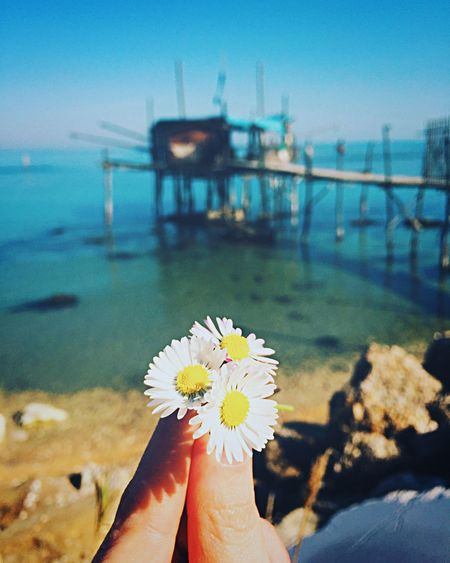 Flower Nature Beauty In Nature Lifestyles Sea Fragility Water Outdoors Day Flower Head Human Hand Sky Freshness Photography Photooftheday Photoshoot