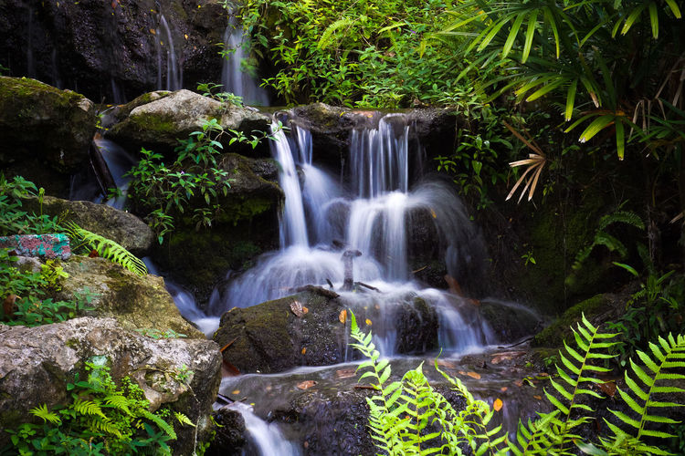Close-Up Of Waterfall Along Plants