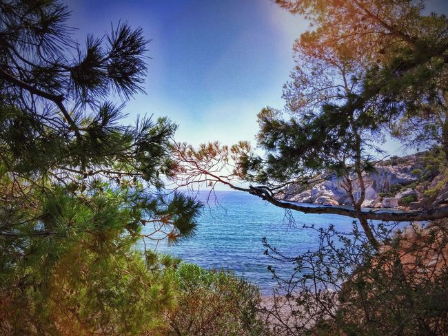 Greece Salamina Summer Nature