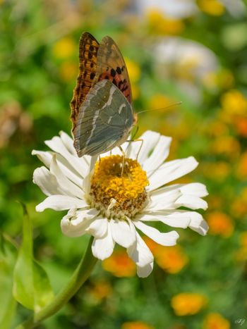 Flower Beautiful Nature Baterfly