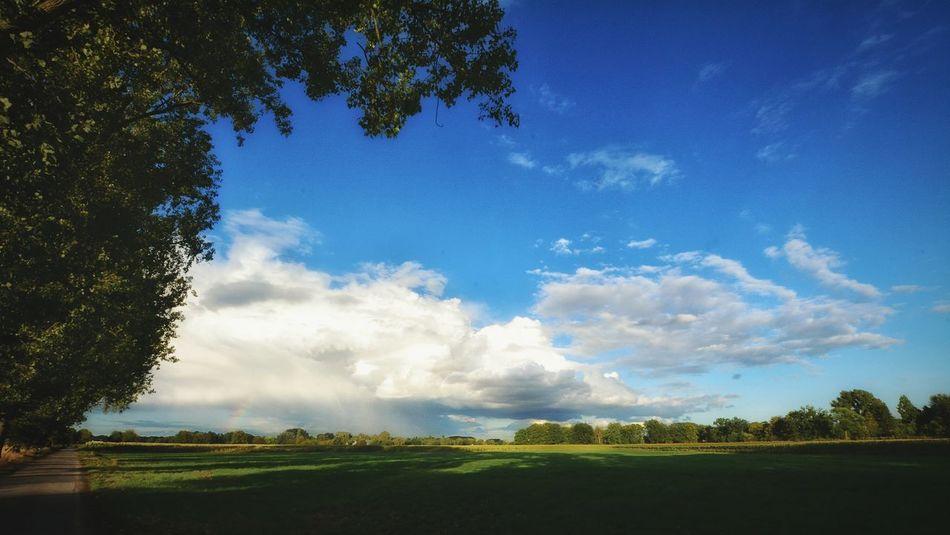 Tree Blue Sky Cloud - Sky Landscape Farmland