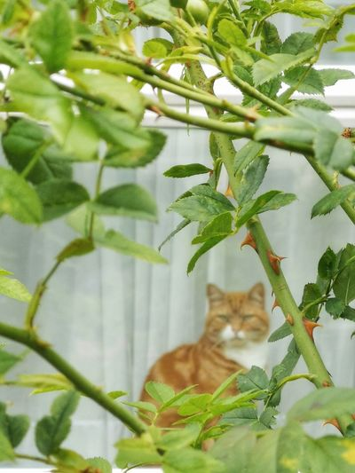 Cat sitting in a plant