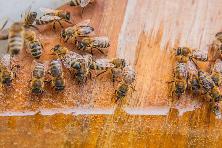Animal Animal Themes Animal Wildlife Animals In The Wild APIculture Bee Beehive Close-up Colony Day Group Of Animals High Angle View Honey Bee Insect Invertebrate Large Group Of Animals Nature No People Outdoors Wood - Material