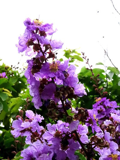 Beauty In Nature Blossom Flower Growing Nature Plant Purple