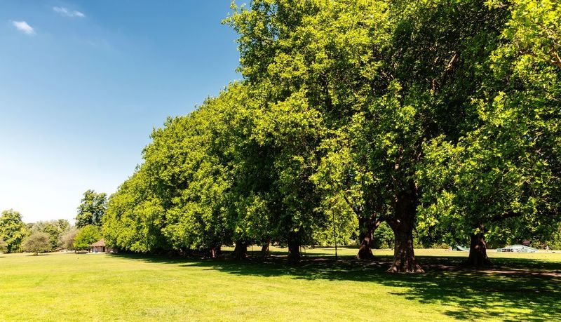 Summer green park Tree Plant Sunlight Nature Growth Green Color Day Field Shadow Land Park Beauty In Nature Outdoors No People Tranquility Park - Man Made Space Tranquil Scene Scenics - Nature Sunny Sky
