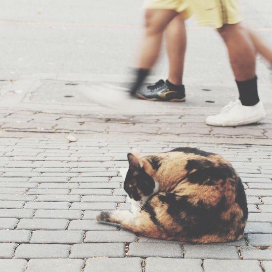 Hipster Kinfolk Cat Run Bike Plant /จบ