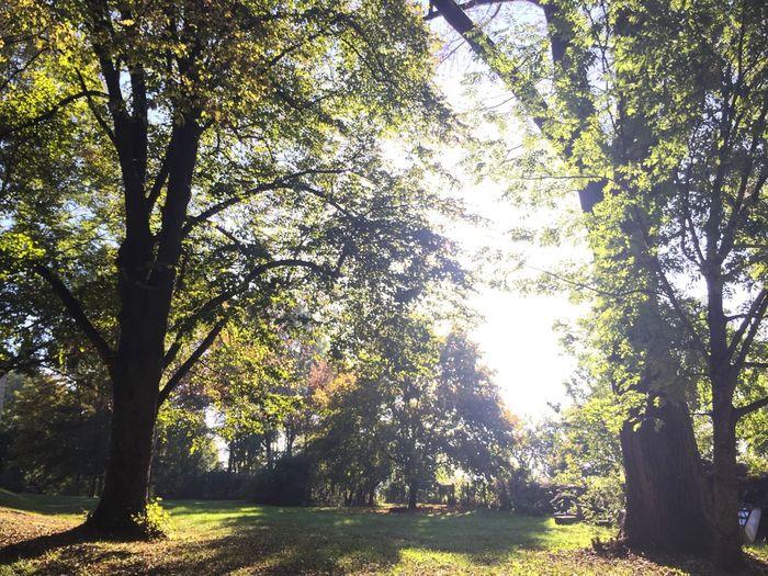 Trees on grassy field in park
