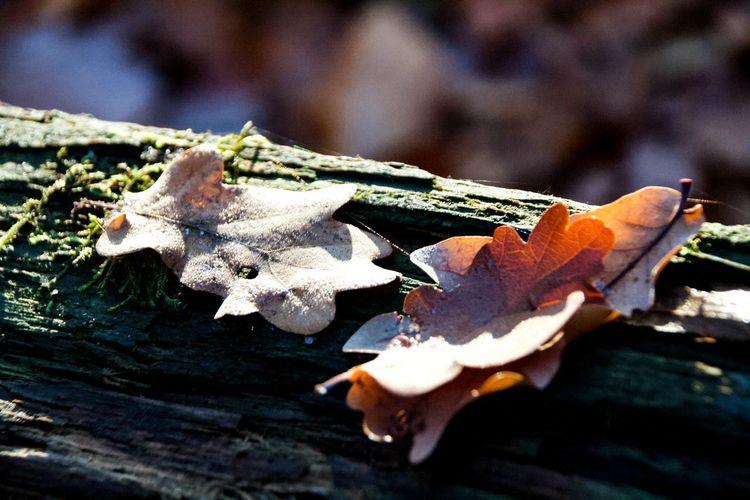 Herbstlaub..