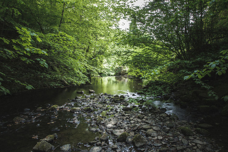 Wood walk Skipton Beauty In Nature Day Environment Flowing Flowing Water Forest Growth Land Nature No People Outdoors Plant Rainforest River Rock Rock - Object Scenics - Nature Solid Stream - Flowing Water Tranquil Scene Tranquility Tree Water