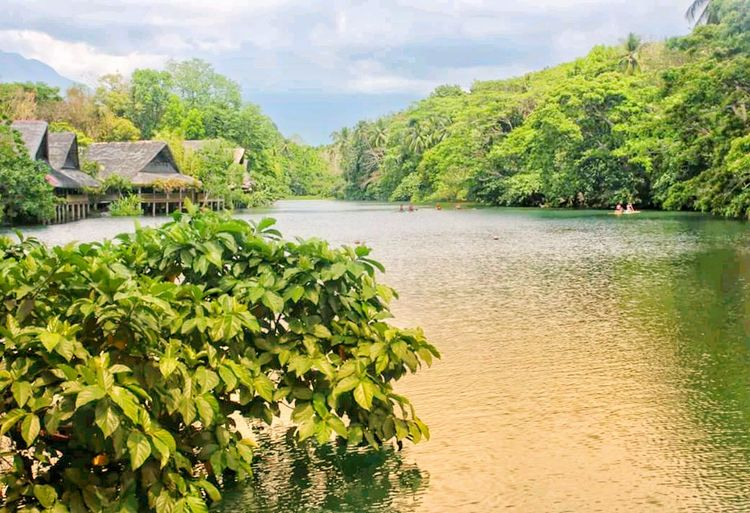 EyeEmNewHere South East Asia Greenery Nature Outandabout Touring Scenery Traveling Philippines Quezon Villa Escudero Tree Water Palm Tree Lake Beach Sky Plant Green Color Cloud - Sky Vegetation Botanical Relaxing Moments Sight