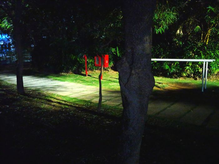 Dark nights... Nightphotography Nightshot Night Lights Tree Trunk Greenery LGV30photography EyeEmNewHere