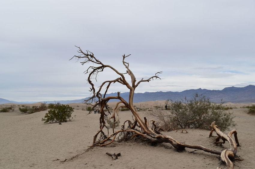Branch Day Death Valley Death Valley National Park Desert Landscape Natural Parkland Nature No People Outdoors Plain Sand Sand Dune Sky Tree