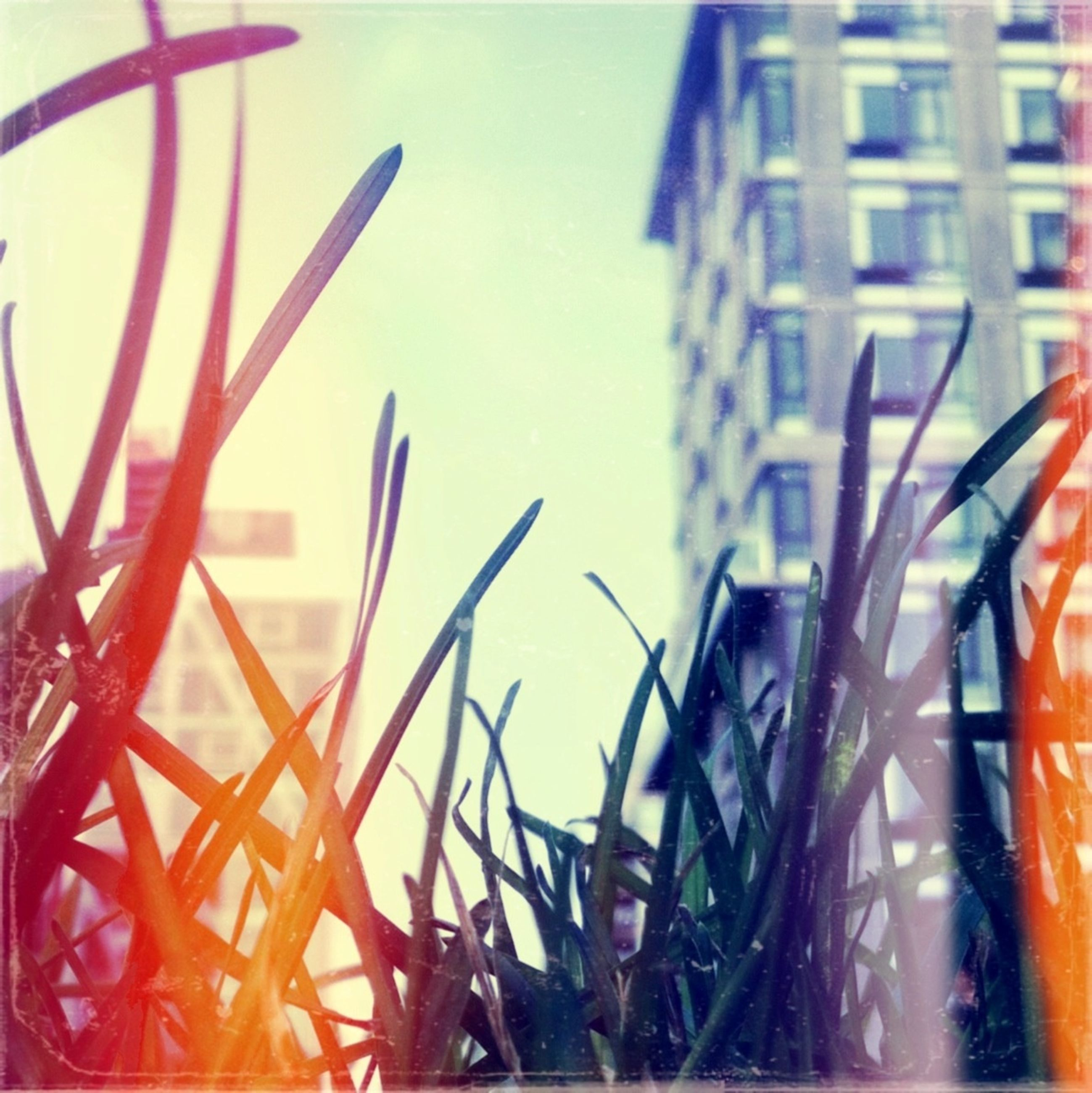 building exterior, architecture, built structure, low angle view, orange color, city, sunset, outdoors, close-up, building, no people, metal, focus on foreground, sky, day, clear sky, dusk, sunlight, metallic, growth