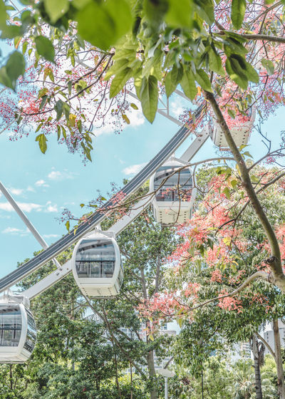 Tree Plant Day Nature Branch Growth Low Angle View No People Transportation Public Transportation Sky Sign Mode Of Transportation Text Built Structure Outdoors Architecture Communication Flower Building Exterior Cherry Blossom Ferris Wheel Ferriswheel Tree And Sky Wallpaper
