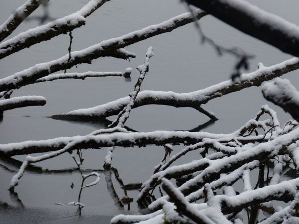 Frozen Snow ❄ Bare Tree Beauty In Nature Branch Close-up Cold Cold Temperature Day Frost Frozen Ice Nature No People Outdoors Sky Snow Tranquility Tree Water Weather Winter Winterwater