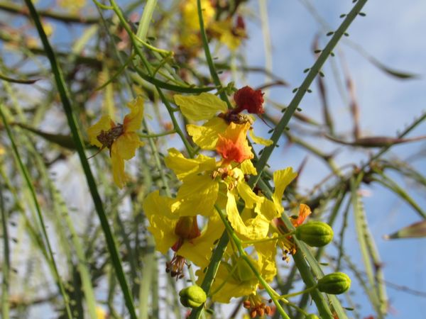 Colorful flowers Galapagos Growth Flower Beauty In Nature Nature Tree Branch Fragility Focus On Foreground Day Outdoors Freshness No People Close-up Yellow Low Angle View Plant Springtime Flower Head An Eye For Travel