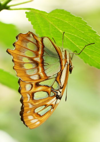 Beautifully Organized Beauty In Nature Butterfly Butterfly - Insect Close-up Insect Leaf Nature No People Outdoors