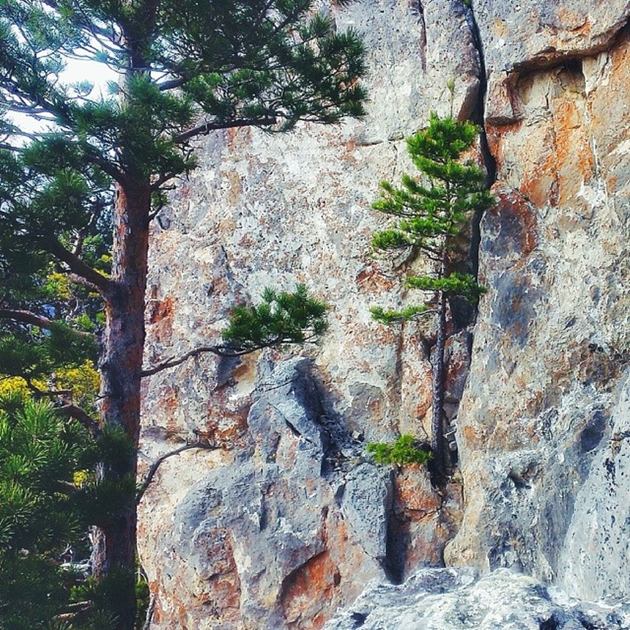 tree, growth, tree trunk, nature, tranquility, forest, green color, beauty in nature, textured, plant, rock - object, moss, rough, day, growing, tranquil scene, outdoors, branch, rock formation, no people