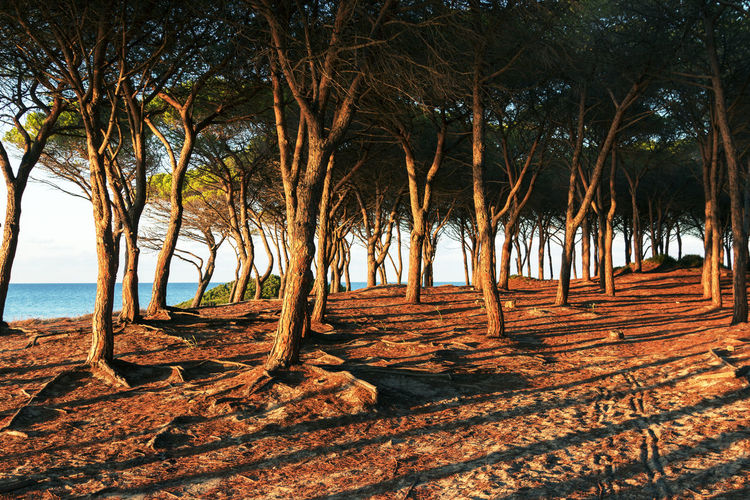 pinewood on beach evening atmosphere Perspectives On Nature Beach Beauty In Nature Branch Budoni Budonibeach Day Evening Atmosphere Nature No People Outdoors Pinewood Scenics Sea Sky Tranquil Scene Tranquility Tree Tree Trunk Water