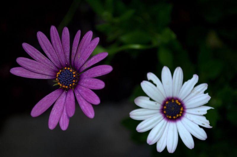 Missing petals.