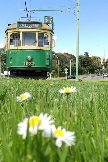 Tram car Flower Freshness Transportation Green Color Outdoors train