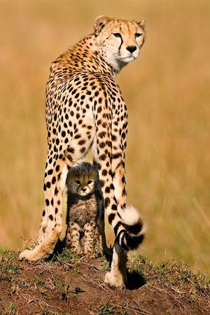 One Animal Animal Wildlife Safari Animals Leopard Feline Animals In The Wild