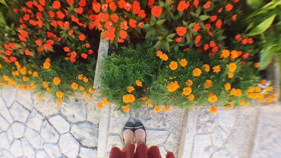 Flower Real People Low Section One Person Growth Plant Human Leg Nature Day Lifestyles Outdoors Women Fragility Standing Human Body Part Beauty In Nature Flowerbed Freshness One Woman Only Adult Saint-Jean-Cap-Ferrat Ephrussi De Rothschild