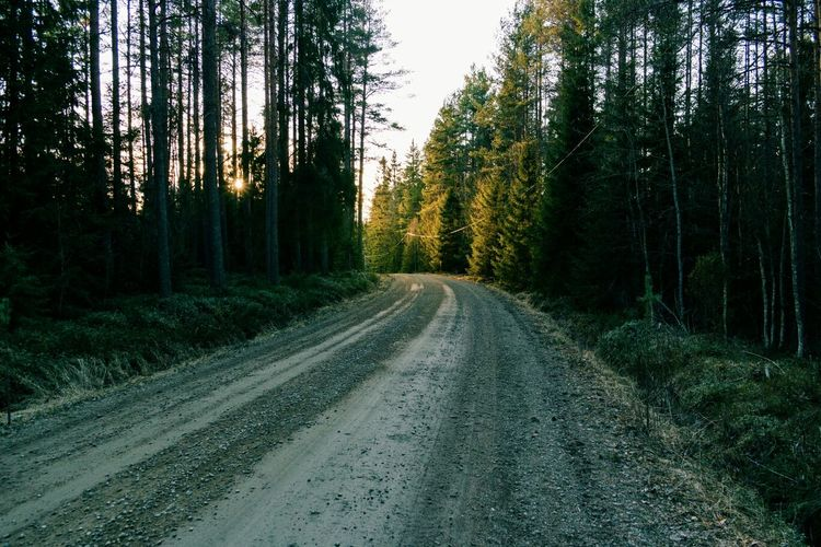 Curved country road along trees