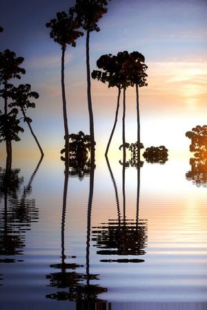 Mothernature Natureporn Nature Beauty In Nature Sky Picoftheday Sun Sunset Sunrise Sky And Clouds Water Reflections Trees