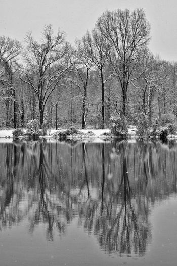 Scenic reflection of bare trees in calm lake