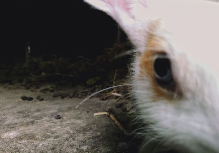 One Animal Animal Themes Close-up No People Animal Head  Mammal Outdoors Animals In The Wild Animal Wildlife Looking At Camera Portrait Domestic Animals Pets Nature Day UnderSea Sky Eyeball Rabbits 🐇 Rabbit Portrait Pet Portraits