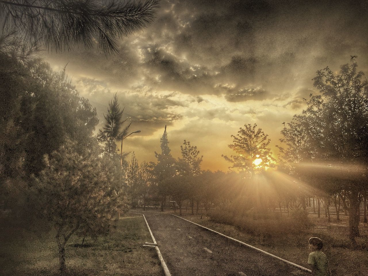 tree, sunset, nature, no people, sun, cloud - sky, tranquil scene, sky, transportation, scenics, the way forward, tranquility, beauty in nature, landscape, outdoors, sunlight, day