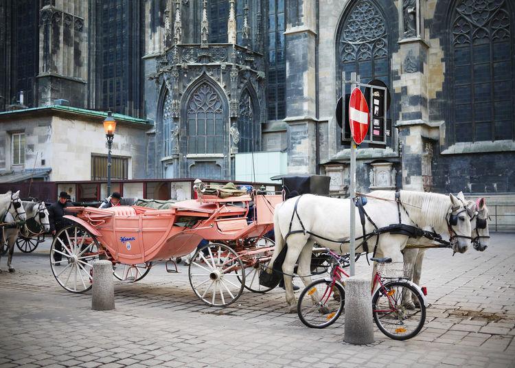 2009 Austria City Domestic Animals Horse Horse Cart Horse Drawn Carriage Outdoors Street Vienna ウィーン オーストリア 道 馬 馬車 Wien