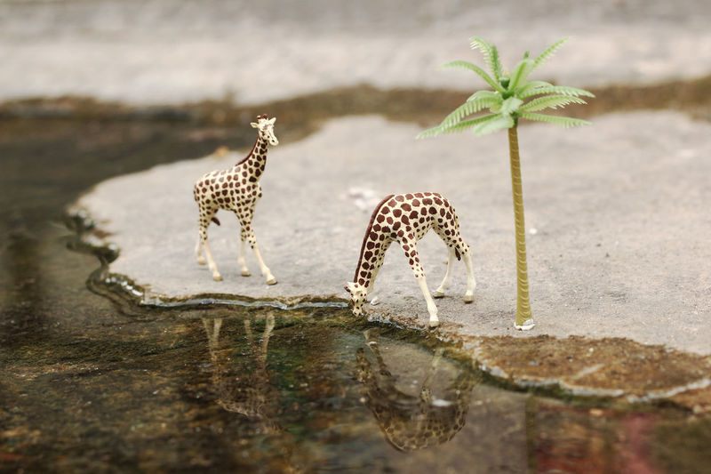Two Miniature